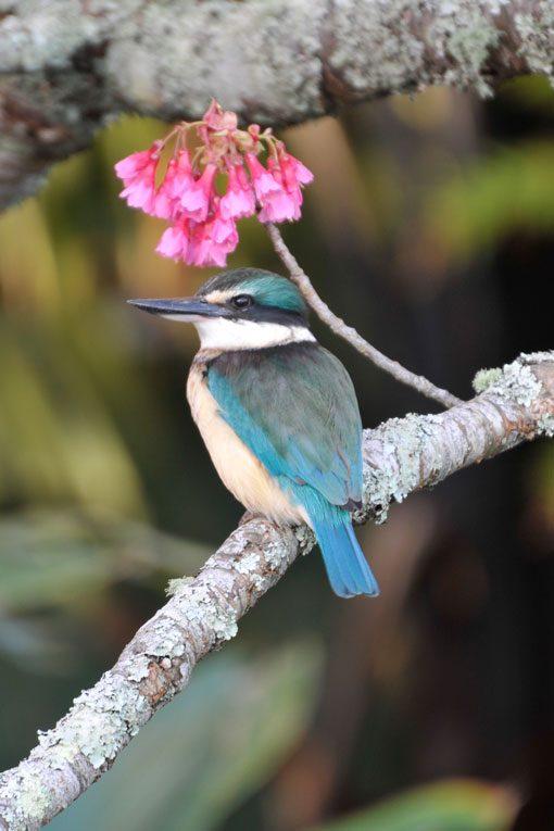 Kingfisher_KI2_DSC8383