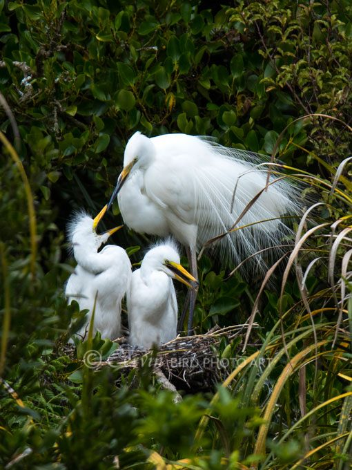 Herons and Spoonbills