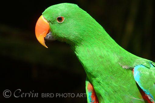 Parrot_PA1_DSCF0801-PCL