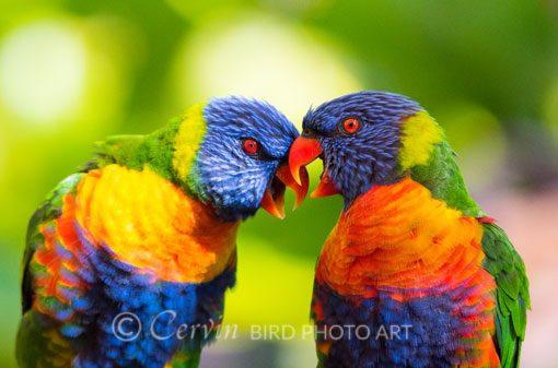 Parrots_PA2_DSC3371parrots