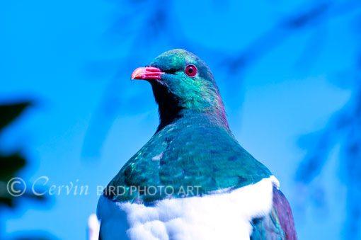 Pigeonhead_PI2_PCL